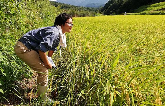 兵庫県農政環境部農林水産局農産園芸課農学職採用